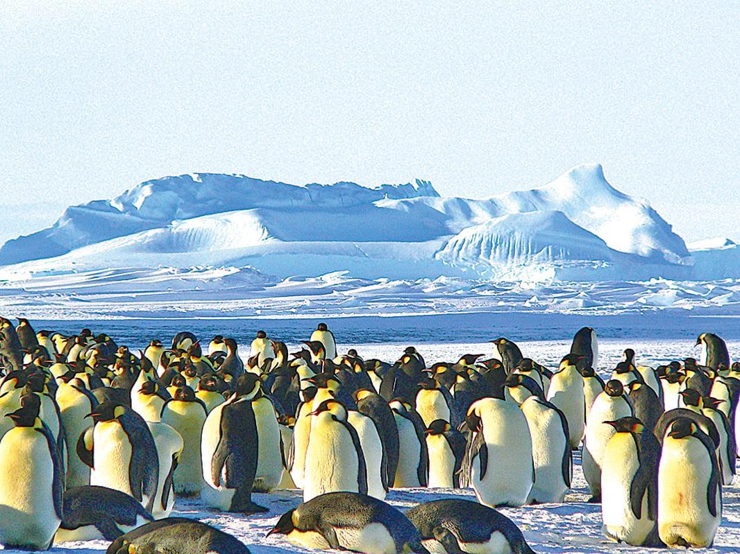 科學家使用美國的陸地衛星在南極發現大量企鵝。(Pixabay)