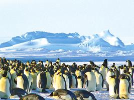 南極太空照驚現大群企鵝 多達150萬隻