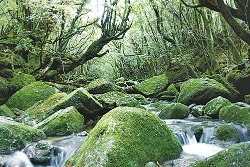 日本屋久島。(受訪者提供)