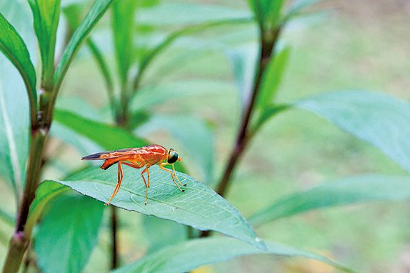 冬眠的昆蟲從土中鑽出來活動了。(大紀元)