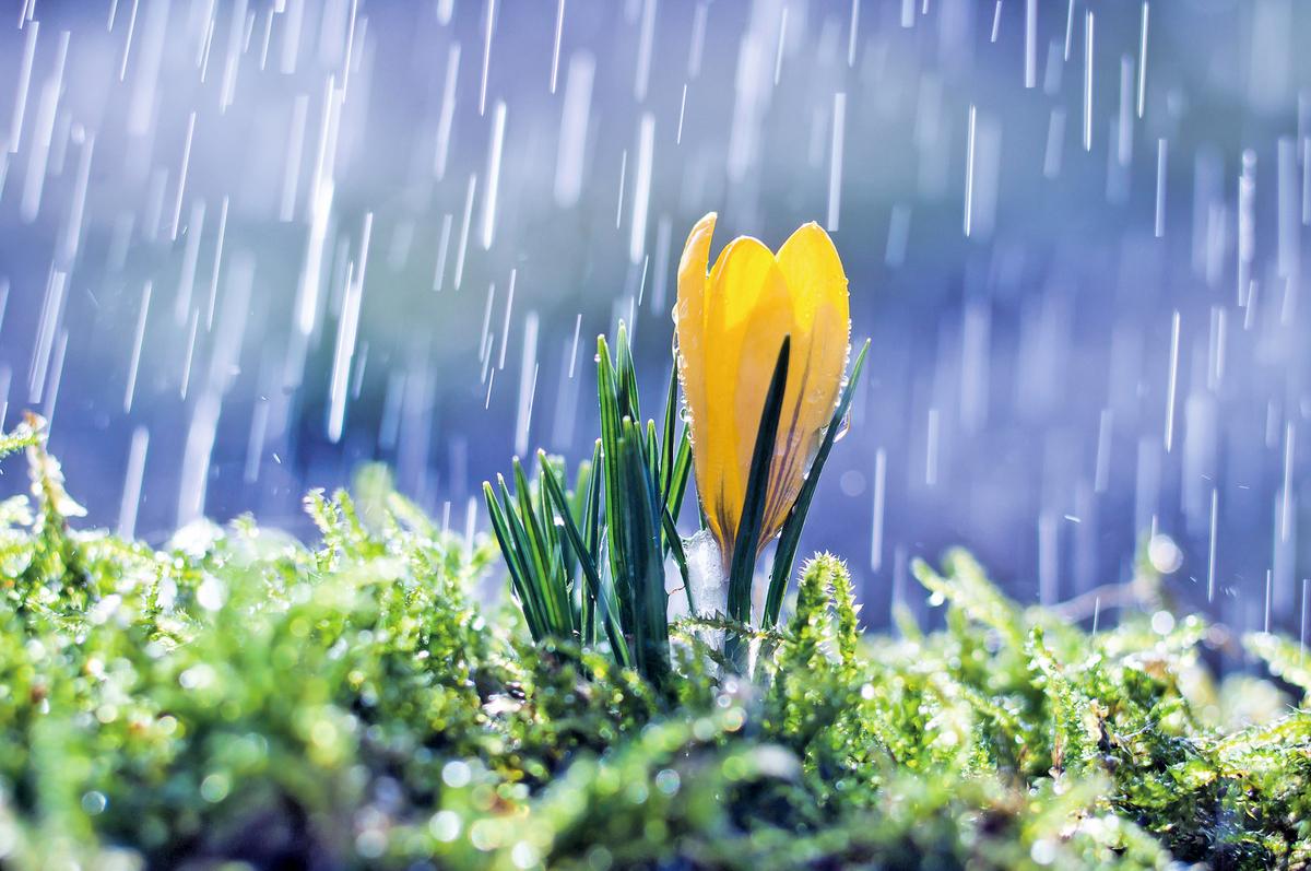 驚蟄時節,春雷始鳴,驚醒蟄伏冬眠的生物,草木也競相舒展。(pexels)