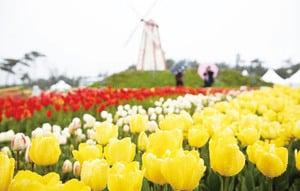 春暖花開春光無限2018南韓春季花卉慶典