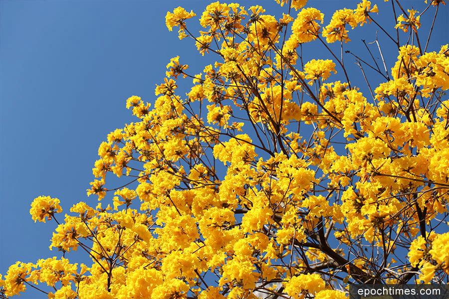 春天到來 繁花盛放展美態