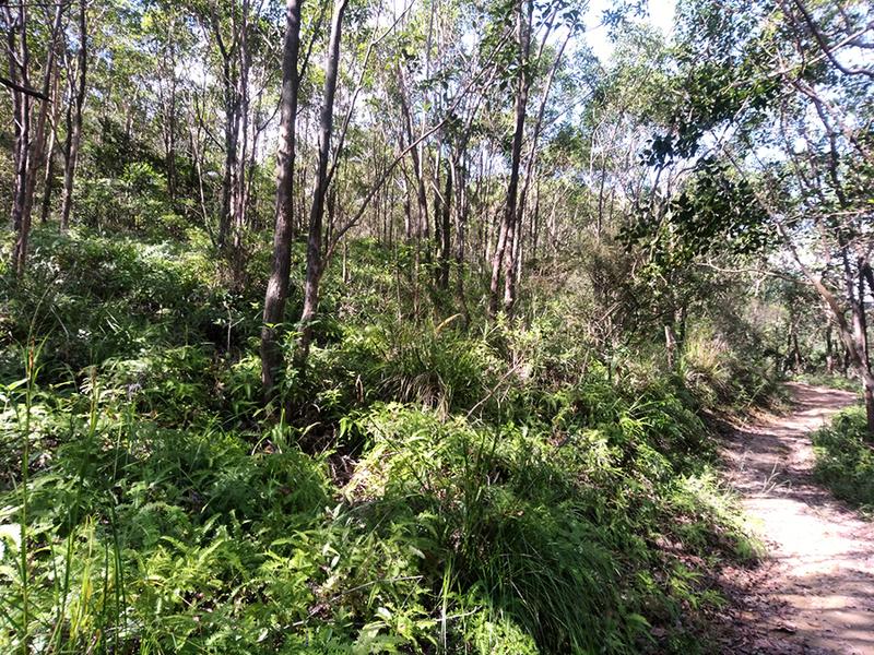 活動速遞 郊野公園遠足植樹日2018