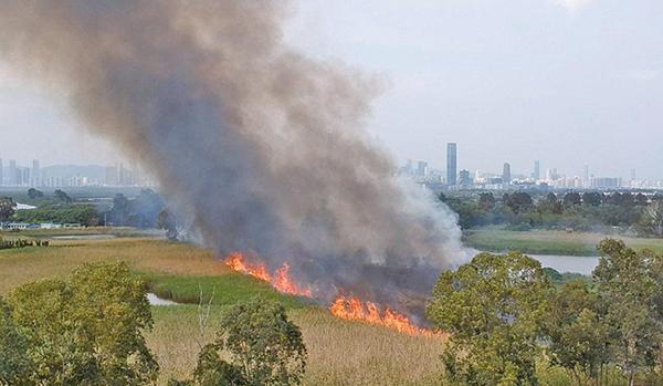 被喻為「雀鳥天堂」的元朗南生圍,3月12日下午發生山火,一大片蘆葦床被燒毀。(環保觸覺提供)