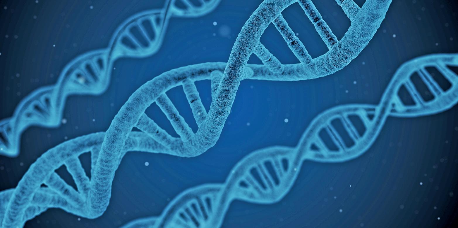 分子生物學的DNA分析恰恰證實,進化論這種假設是個錯誤。(Fotolia)
