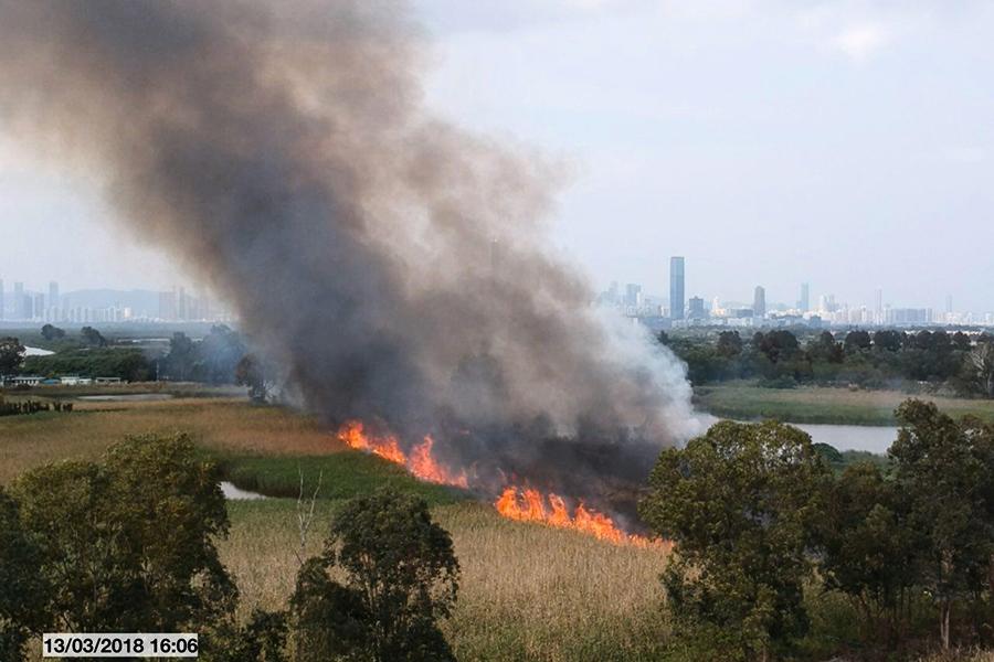 南生圍山火肆虐 保育再引關注