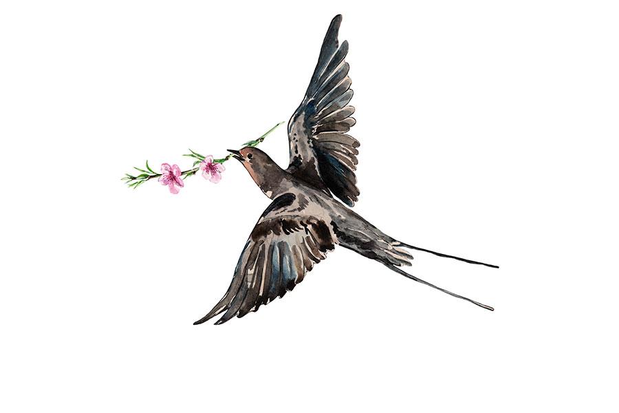 春分之時,燕子從南方飛來了。(Fotolia)
