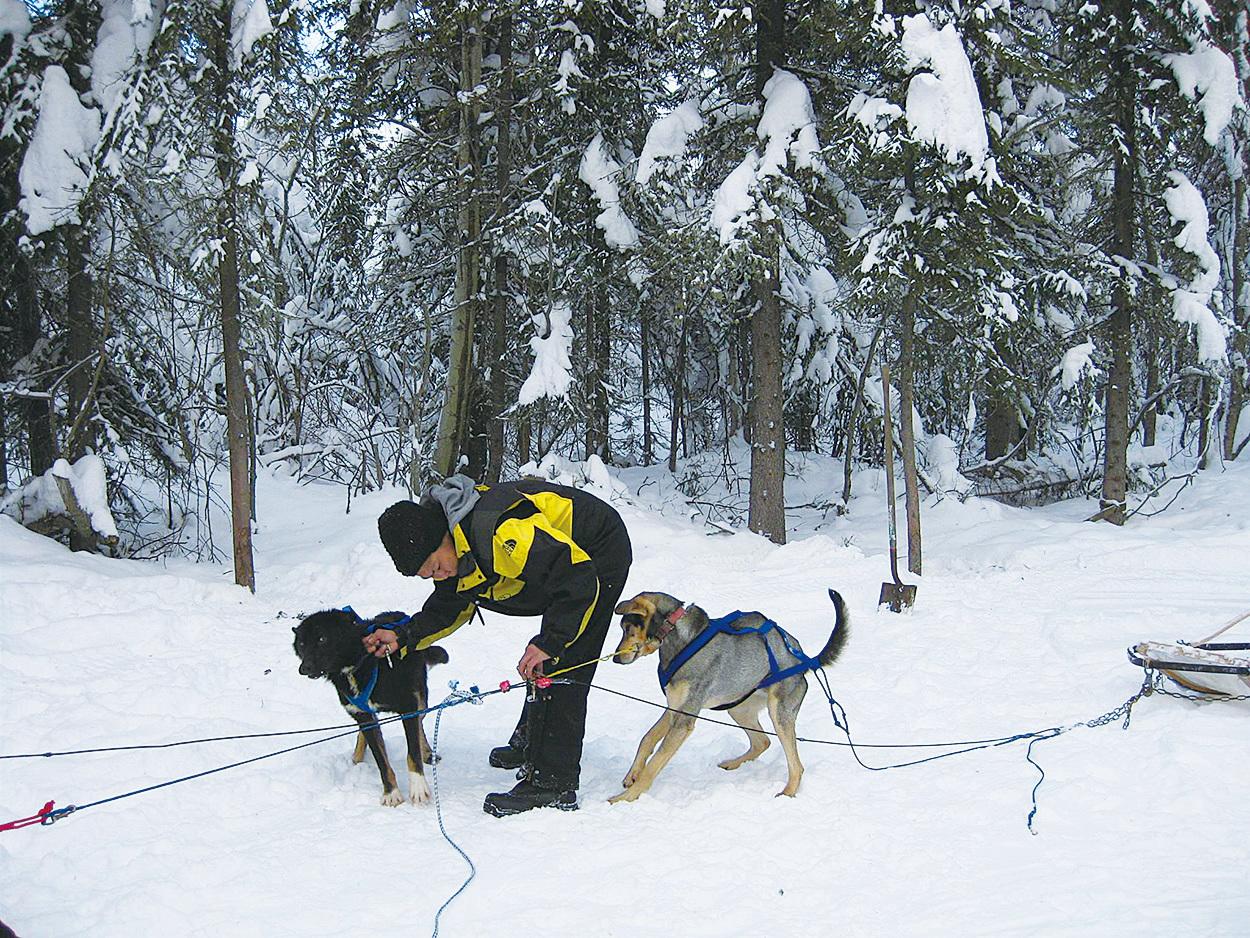 當地原住民印地安人經營的狗拉雪橇場。(徐曼沅/大紀元)