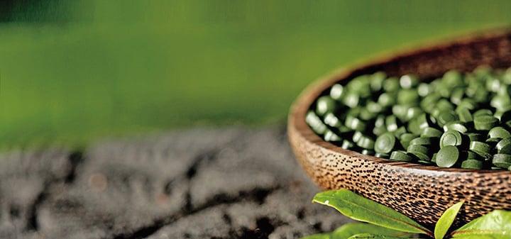 小球藻是目前食物中唯一同時起到這兩種作用的完美及天然的全食物。