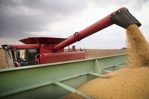 分析:為何中共不敢對美國大豆徵收關稅