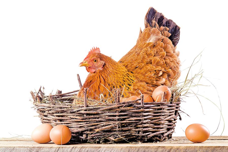 雞蛋是好蛋