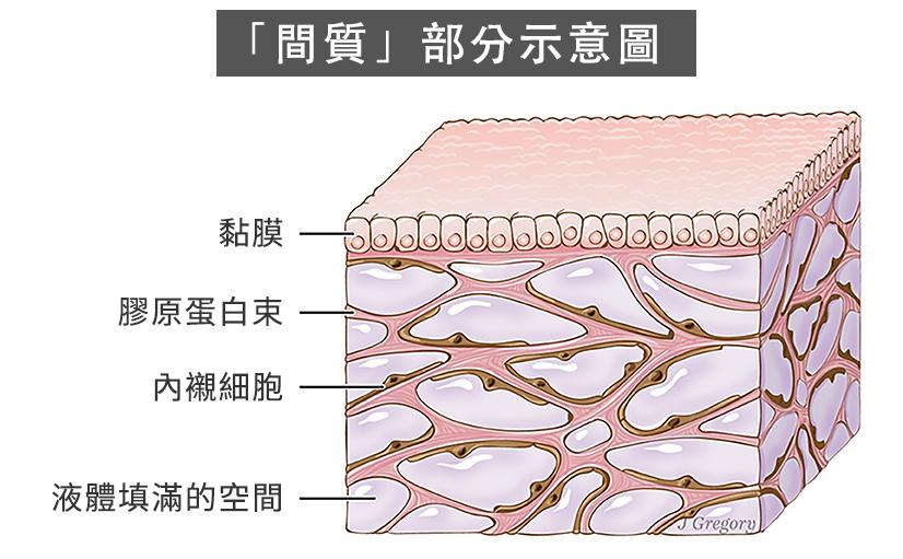 這個被叫作「間質(Interstitium)」的新器官是一個遍佈人體、也許和中醫裏所說的經脈有關。(Wikipedia/大紀元製圖)ㄒ