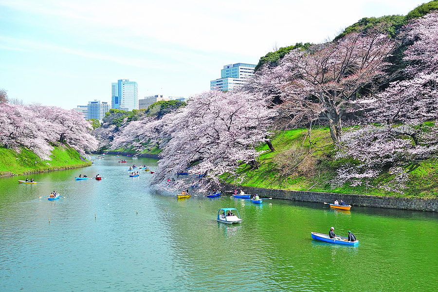 東京春櫻燦爛 千鳥之淵美不勝收
