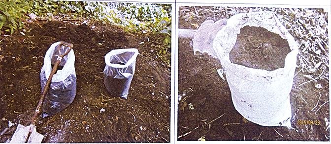 落葉變成腐植土後,就是天然肥沃的有機肥,可以種菜、植盆栽。(曾晏均翻攝/大紀元)