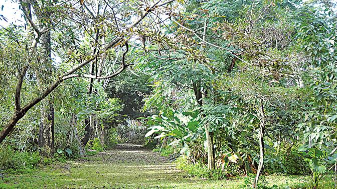大武山下「如是居」自然生態園區,原本是荒蕪之地,經吳松賀打造成有綠色步道與奇花異草的世外桃源。(曾晏均/大紀元)