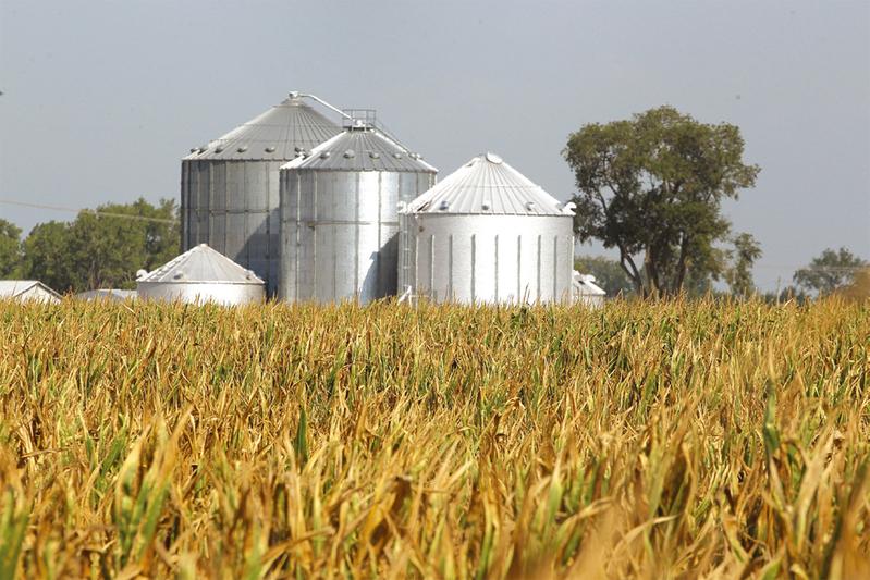 圖為美國中西部印地安納州乾旱的玉米田。(Getty Images)
