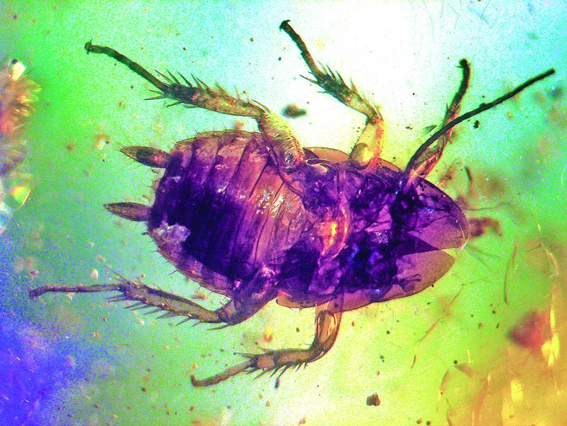 蟑螂有超強生存能力 再次質疑進化論