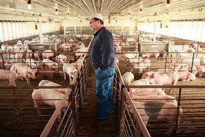 中共對美農產品增稅 特朗普政府助農民有妙招