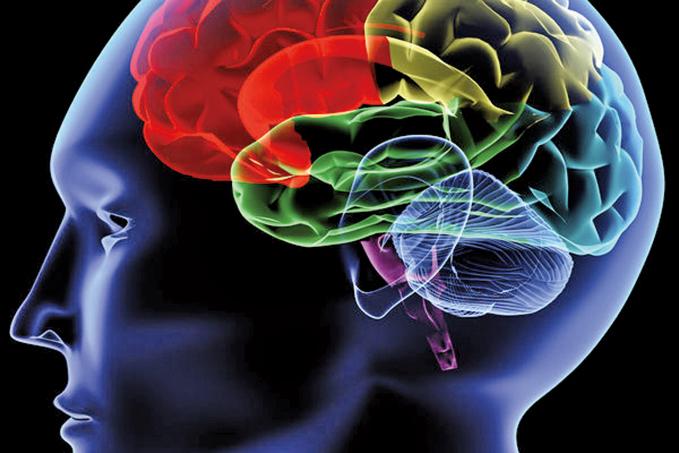 Maura Boldrini教授領導團隊的最新研究指出,即使我們已高齡70歲,大腦仍然每天創造數百個新神經元。 (Fotolia)