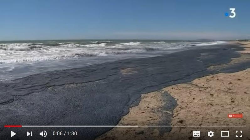 大批帆水母被沖上法國南部的一處海灘,密密麻麻一片。(視像擷圖)