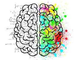 研究---IQ分數並不代表智力高低