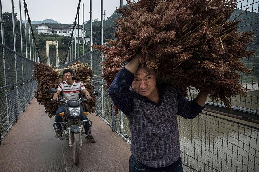 圖為貴州省一農夫正在運送高粱。(Kevin Frayer/Getty Images)