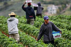 應對中共報復關稅 加州農民力挺特朗普