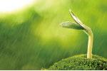 穀雨源自古人「雨生百穀」之說。指雨水增多,大大有利於穀類農作物生長。(fotolia)