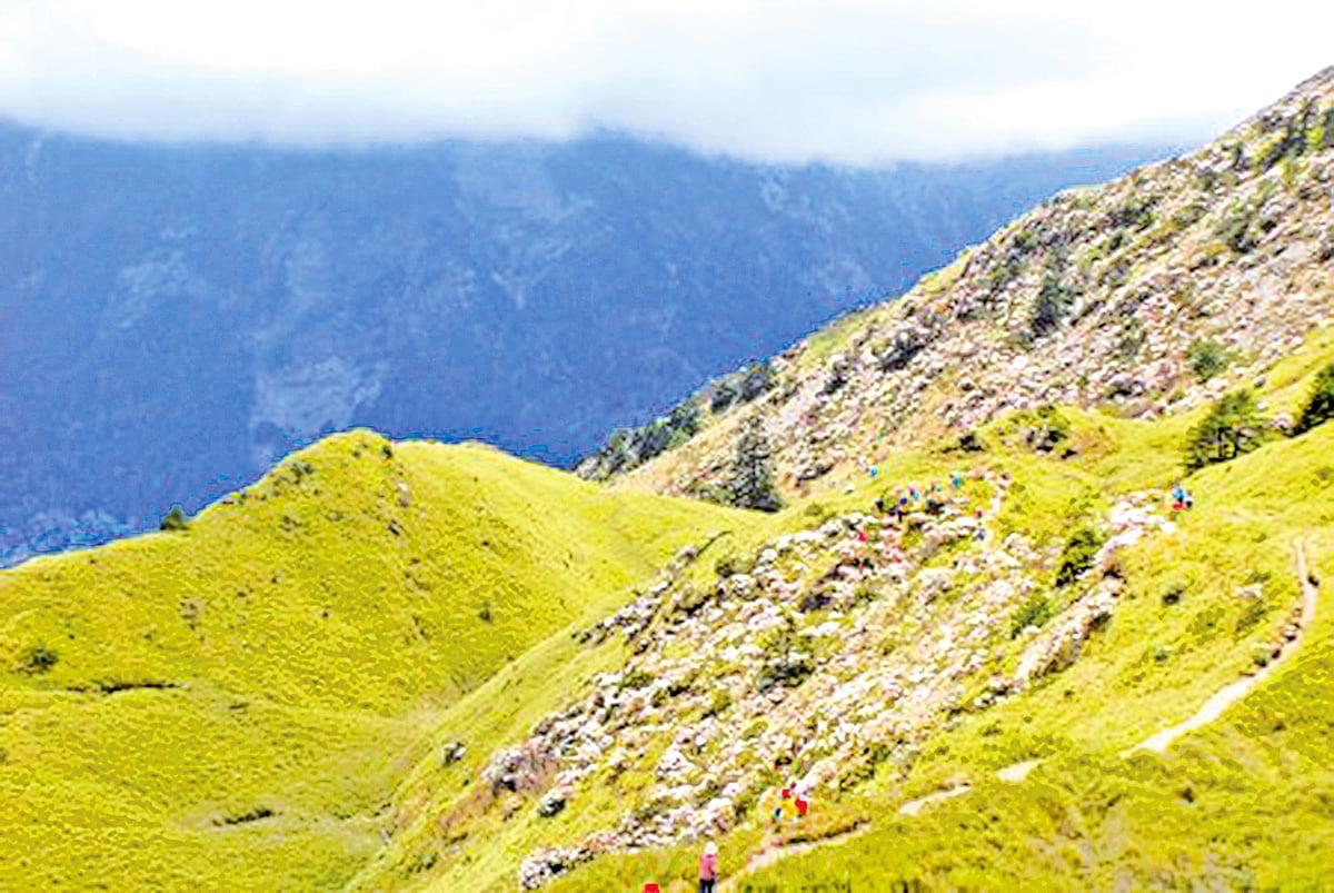 箭竹為開滿山坡谷底的杜鵑花鋪上翠綠鵝黃漸層的地毯。