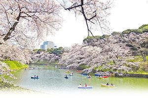 日本千鳥之淵 情侶心中最美賞櫻地