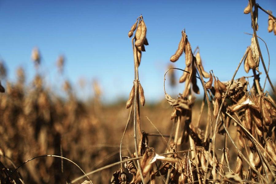 美國貿易代表團抵華進行談判之際,黑龍江和吉林傳收到政治任務,要求擴大大豆種植面積的消息。(Mario Tama/Getty Images)