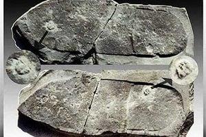 慧眼識寶 美少女發現4.7億年前三葉蟲化石