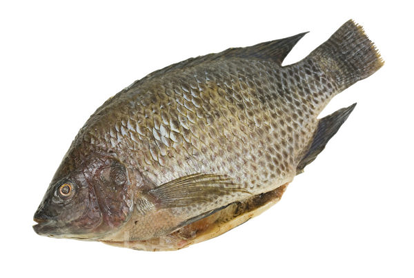羅非魚(𩶘魚)。(Fotolia)