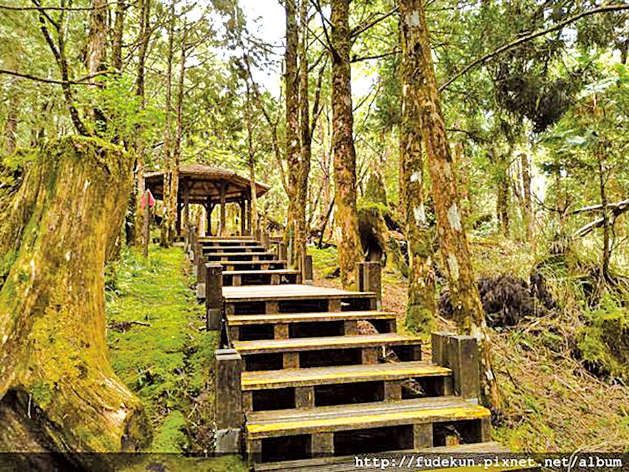 原始森林步道古木參天,步行其中十分舒暢。