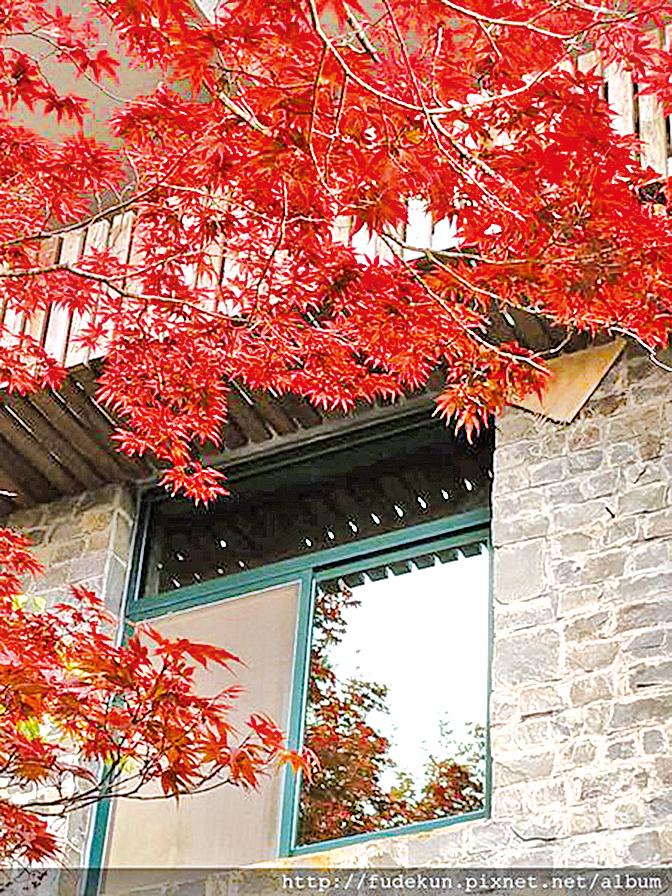 賞紫葉槭的季節在每年3月~10月。