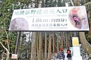 走訪雪猴之鄉  地獄谷