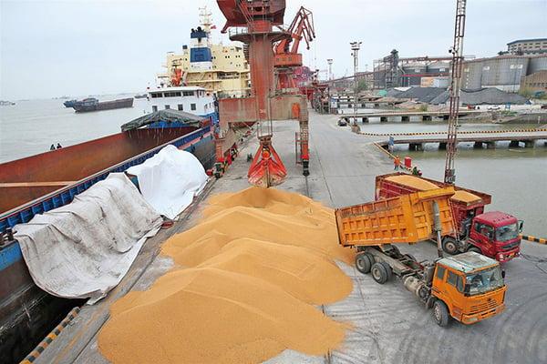 中美第二輪貿易會談正式在美國華府舉行,分析稱中方或在農產品關稅等方面有相當讓步。圖為中國江蘇南通港卸下的美國大豆。(AFP)