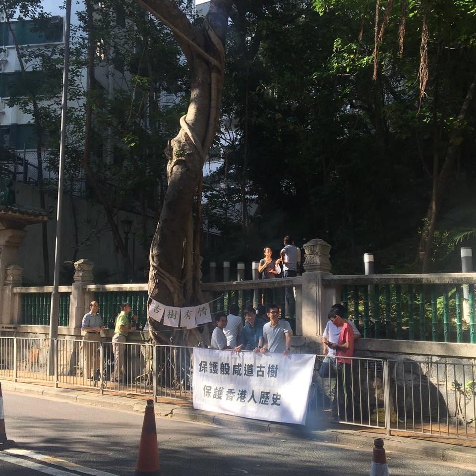 地政總署昨日移除般咸道兩棵細葉榕,有立法會議員及環保團體到場抗議,批評政府決定倉促。(區諾軒Facebook)