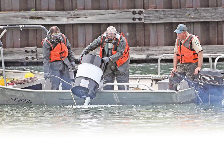 中國移民肯塔基辦廠 解決亞洲鯉魚難題