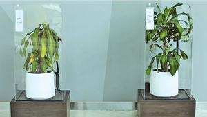實驗植物被言語欺淩和讚美 結果驚人