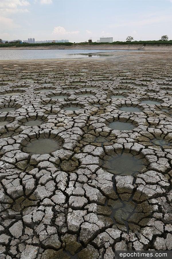 這些坑洞據了解是由於魚塘中的鯽魚(福壽魚)要挖洞產卵而造成的。(陳仲明/大紀元)