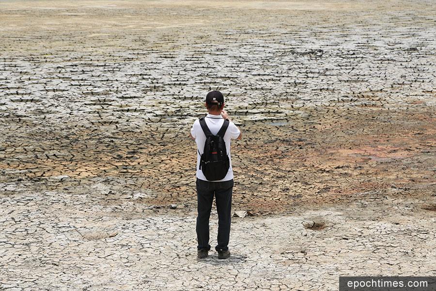 有市民在酷熱天氣下仍專程前來該魚塘拍照。(陳仲明/大紀元)