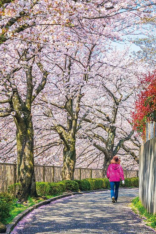【浮生行吟】通往春天的路