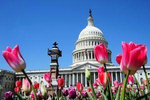 美國會出台新法案 遏止中共「長臂」滲透