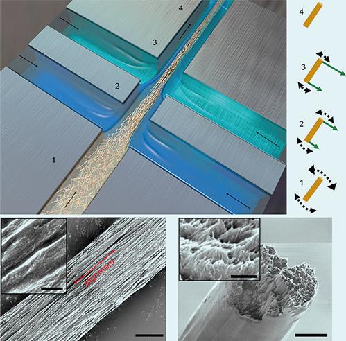 研究者們造出了一種生物材料,其強度超過了蜘蛛絲、鋼、和其它任何金屬、合金、玻璃纖維及大多數的合成材料。(Mittal et al)