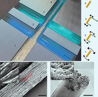 新納米材料 強度超過鋼和蜘蛛絲