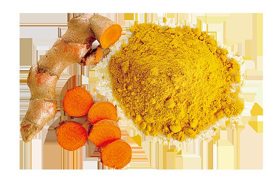 黃色的天然色素可以把老薑黃搗碎後取得。