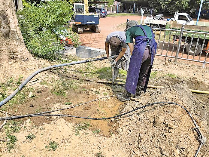 樹醫生劉東啟採用水刀在樹下土壤打洞,穿透土下硬層,加強透水性和通氣性,再填入液體有機質到洞中,引導根往下生長。(林俊寬提供)