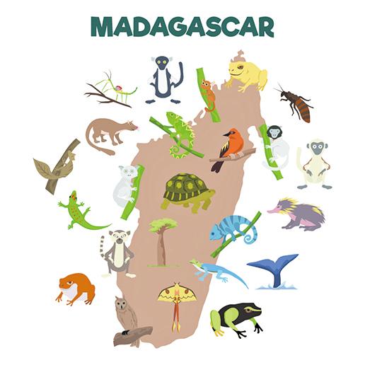 黑眶毒蟾入侵馬達加斯加生物